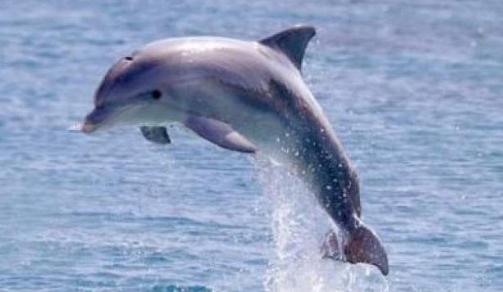 Rüya Tabirleri; Rüyada Yunus Balığı görmek ne anlama gelir?