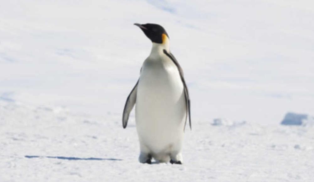 Futbolcu penguen değildir!
