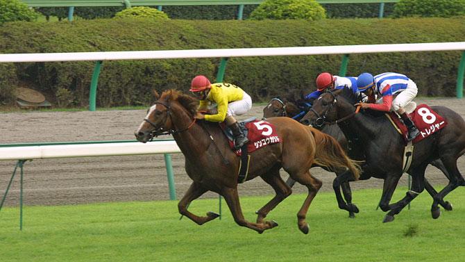 At yarışlarında rekor ikramiye!